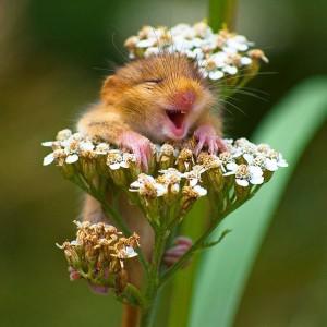 Petit hamster en train de sourire