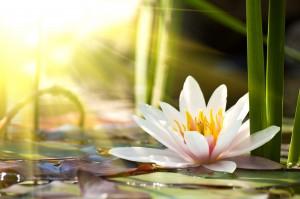 Photographier les fleurs: conseils pour susciter l'émotion