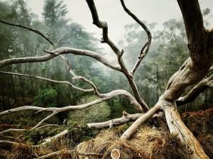 Des branches mortes