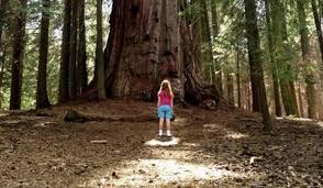 L'enfance face à la nature, par James Eimmerman