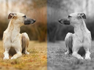 Photo couleur vs photo noir et blanc