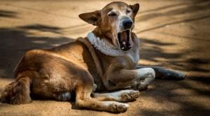 Prendre des photos de votre chien - astuce