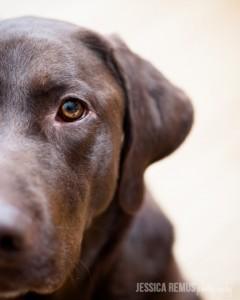 Photographier un chien dans les yeux